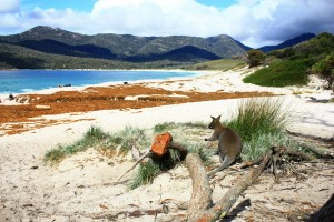 Wineglass Bay - Tasmanien